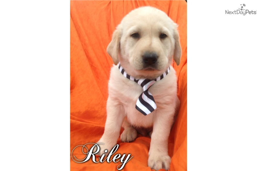 Dogs For Sale In Lancaster Sc
