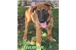 Picture of Truman