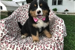 Picture of AKC Jada