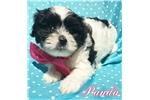Picture of (Mini) Panda