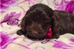 Picture of Mini) Mocha