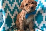 Picture of (Mini) Riley