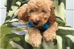 Picture of Mini Simon