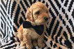 Picture of (Mini) Bosco