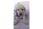Picture of Silver) Jazmine