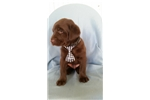 Picture of Hershey