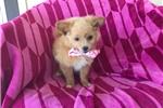 Picture of Clara