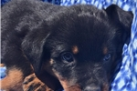 Picture of Akc Juneau