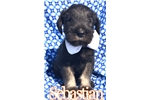 Picture of Sebastian