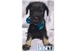 Picture of Bosco