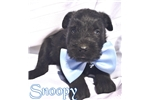 Picture of Snoopy