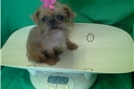Picture of LUCY - TINY TOY SIZE!!