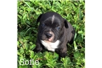 Picture of Sofie