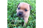 Picture of Scotty