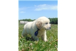 Picture of Frisco - male - 50/50