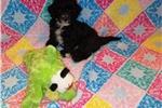 Picture of Precious Romeo