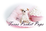 Picture of Starla* White Teacup Short Coat chihuahua Princess