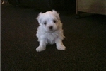 Picture of Jane - Cathy's puppy's