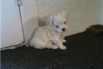 Picture of Jenny - Cathy's puppy's