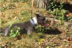 Picture of Hazey looking for a forever home