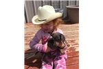 Featured Breeder of Mini Dachshunds with Puppies For Sale