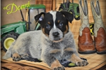 Picture of Darling Baby Donni!~~AKC Champion Sired~~