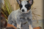 Baby Serenity!!! Such A Sweetheart... | Puppy at 16 weeks of age for sale