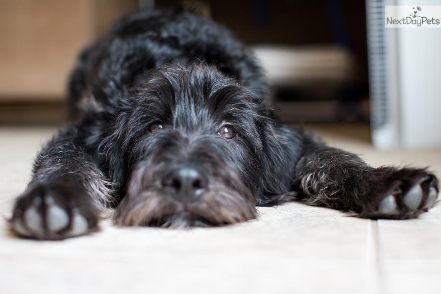 Dog Rescue Bay Area California