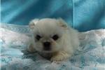 Picture of Suki M
