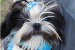 Picture of Mustache M