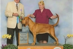 Picture of UP COMING 100% Champion Euro Imported Dual Champs