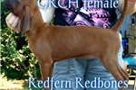 Picture of Grand Champion Sired Champ Mom