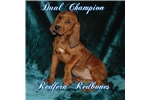 Picture of AKC DUAL Champion Parents(male)