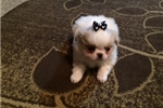 Picture of Sweet Little Bella