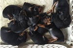 Picture of Briese Way Minpins