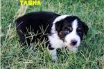 Picture of TASHA - Black-Tri Female