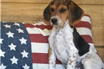Picture of REGISTERED MALE - MICK ***www.puppys-r-us.com