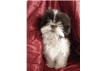 Picture of Nermal The World's Cutest Puppy Dog CPR Registered