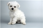 Picture of CHIKO