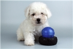 Picture of Boomer-WWW.ELITEPUPPIES.COM (Q064359ELP)