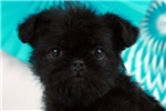 Picture of Ruby - WWW.ELITEPUPPIES.COM (Q062264)