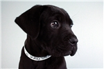 Picture of Spur-WWW.VALUEPUP.COM (Q063945VAL)