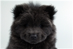 Picture of Brewer-WWW.VALUEPUP.COM (Q033361VAL)