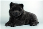 Picture of Brewe-WWW.VALUEPUP.COM (Q033361VAL)