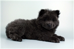 Picture of Victor-WWW.VALUEPUP.COM (Q033361VAL)