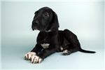 Picture of Roscoe-WWW.VALUEPUP.COM (Q064040VAL)