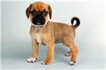 Picture of Tinker-WWW.VALUEPUP.COM (Q014119VAL)