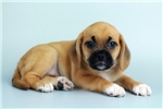 Picture of Annaliese-WWW.VALUEPUP.COM (Q013557VAL)