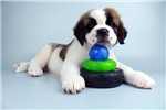 Picture of Buttons-WWWW.VALUEPUP.COM (Q013665VAL)