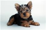Picture of Zoe-VALUEPUP.COM (Q063944VAL)
